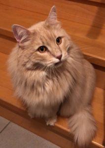 Ismo Katze