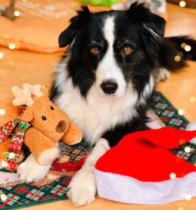 Emmy mit Weihnachtselch